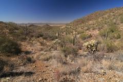 IMG_9528 (simon_travelboy) Tags: arizona tucson saguaronationalpark