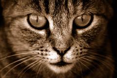 Gatto del porto 2 (socrates197577) Tags: primavera fauna nikon porto 1001nights gatto soe gatti animali worldbest platinumheartaward theperfectphotographer goldstaraward ringexcellence