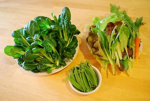 tatsoi, lettuce, pea pods