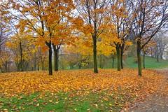 Milano, l'autunno al Parco Monte Stella (Montagnetta) (mario_ghezzi) Tags: italy milan nikon italia milano coolpix autunno lombardia 2009 noreflex montestella p6000 qt8 montagnetta milano8 nikoncoolpixp6000 coolpixp6000 parcomontestella marioghezzi