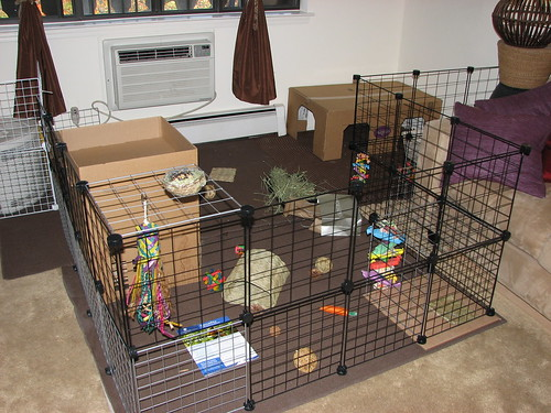 new bunny area 1