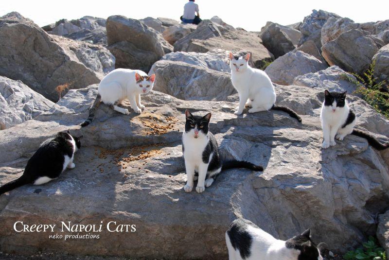 Napoli-013-Cat