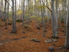 Moncayo en Otoo (Javier Garcia Alarcon) Tags: rboles banco paisaje bosque bancos rbol otoo moncayo