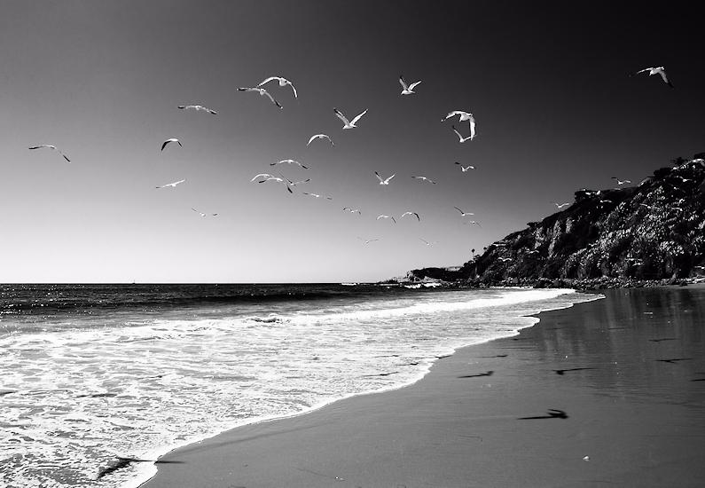 Birds over Laguna
