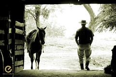 Alma de galpão (Edu Rickes) Tags: brazil horses brasil caballos cow cavalos rs riograndedosul sul tradicionalismo rodeio gaúchos beautifulshots piratini gineteada brazilianphotographers fotógrafosbrasileiros tirodelaço todososdireitosreservados fotógrafosgaúchos culturagaúcha edurickes belasimagens southofbrasil edurickesproduçõesfotográficas copyright©2010 fotografiaslegais