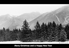 To all my Flickr friends and contacts... (Chilliwack Jack) Tags: christmas trees winter snow cold nature beautiful misty contrast frozen soft solitude glow peace frosty henderson merrychristmas mothernature chilliwack countrylife fraservalley rurallife columbiavalley cjack lx3 chilliwackjack