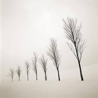 7even Trees