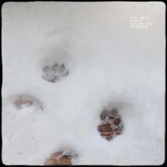 . (5canner) Tags: winter snow cat paw tracks minimal stop curiosity