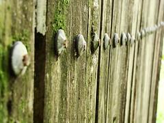 fila de pregos (Mariana BMS) Tags: macro prego fila objeto antigo pregos marianabms