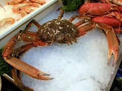 Fresh uncooked Spider Crab