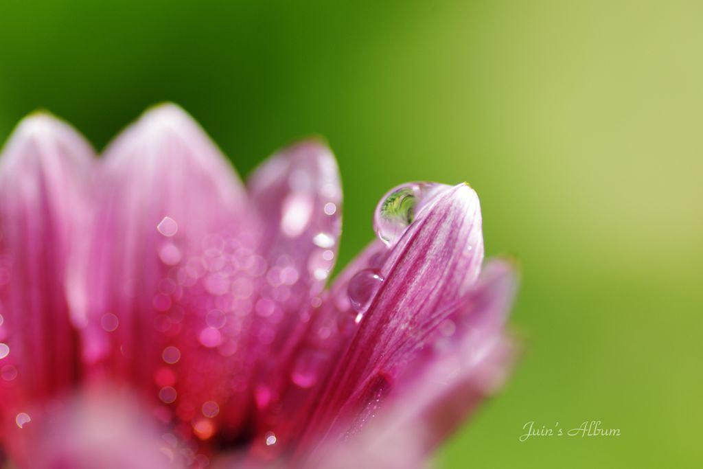 自然界的水晶珠。植物園尋寶