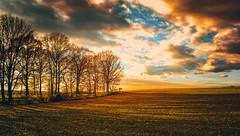 not so far (mood1975) Tags: sunset sky spring clouds sun trees blue poland wodzislaw slaski poles green