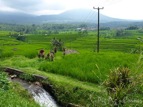 Bali 37-2