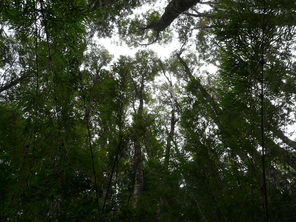 nunca pierdas el color de la esperanza juannypg tags patagonia verde green argentina