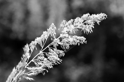 Monochrome grass