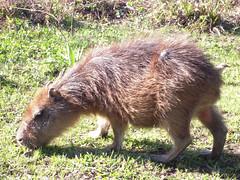 baudchon-baluchon (41 sur 43)