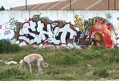 shit & iwana + dog (dug_da_bug) Tags: madrid streetart graffiti spain shit abc iwana fumao chicoiwana