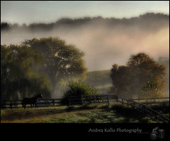 Call Me Misty - King Township Early Morning Fog (Andrea Kollo Photography) Tags: flowers mist toronto ontario canada flower macro nature misty fog gardens garden cards nikon dof bokeh foggy depthoffield gta greetingcard horticulture floralprint macrophoto naturephotography greetingcards macrophotography artprint flowerart natureart gardentour mistymorning floralprints nikond200 yorkregion eventphotography ontariophotographer nobleton macrophotograph flowercards kingtownship naturephotographs nikonphotography nikonphoto horseinthemist natureprints bokehphotography flowerartcards bokehphoto bokehphotographs floralgreetingcards floralartprint floralartprints flowerartprint flowerartprints floralgreetingcard andreakolloontariophotographer natureartprints copyrightandreakollo estategardenphotography gardentourphotography communtyprofiles communityprofilephotography wwwandreakollophotography natureflowerphotographs floralartcards horticultureprints horticultureprint horticulturegreetingcard nobletonkingtownship kingtownshipgardens nobletongardens