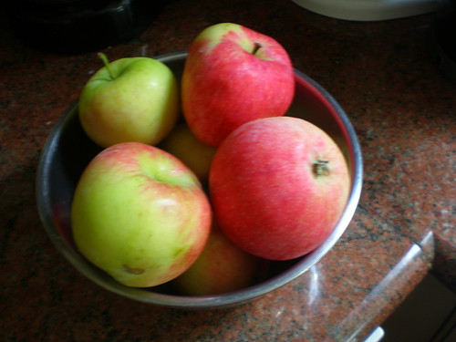 Two and a half pounds of foraged heirloom apples