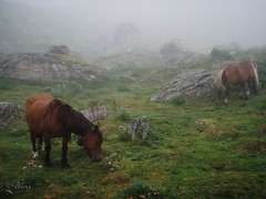 Grand Raid des Pyrenees Ultra 2009 (385)