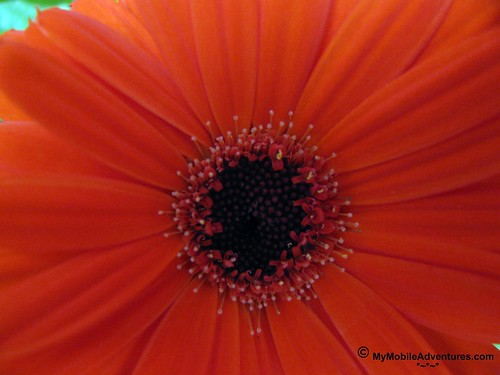 IMG_1682-WDW-EPCOT-flowers