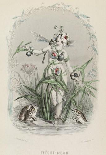 Flèche d'Eau - Les Fleurs Animées - JJ Grandville