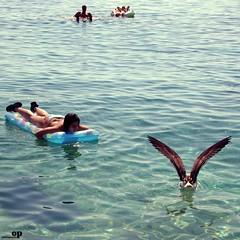 Dialogue with a Seagull - Orebc, Croatia (Osvaldo_Zoom) Tags: sea summer woman beach nature water seagull croatia dialogue transparence infinestyle sabbioncello orebc