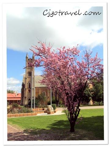 Cherry Blossom York Town, Australia