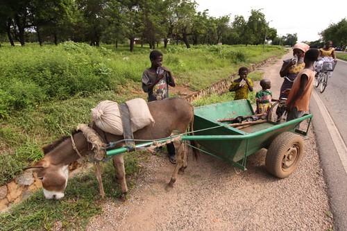 Donkey Wagon. Near Navrongo, Ghana.