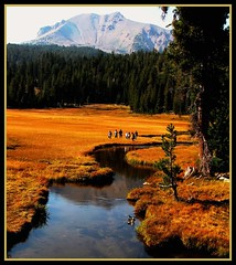 Lassen Volcanic National Park, Meadow in Fall (moonjazz) Tags: meadow nationalpark fall california lassen stream field forest wilderness volcano cascade mountain water clean trees pine dome geology alpine hike pretty lovely kings creek canon travel trip environment learning natural science flckr moonj moonjazz11 photography