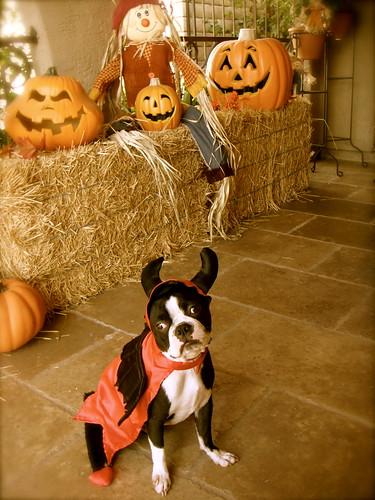 Gus halloween 2009