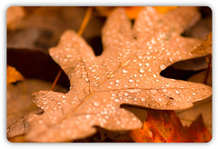 Autumn in the Rain (Elie R./L.E. Photography) Tags: road trip autumn red anna orange brown mist lake macro fall halloween nature colors leaves rain lens outdoors fire virginia three spider dewdrops leaf drops search rust dof rice bokeh outdoor small magenta plymouth sigma pearls le journey dew tiny raindrops bullet lakeanna elisa elie drizzle bumpass shallowdof leavesmacro elisarice elierice eliesiteflickrcom