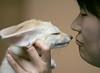 Fennec fox (floridapfe) Tags: cute animal zoo nikon korea fox fennec everland 에버랜드 fennecfox
