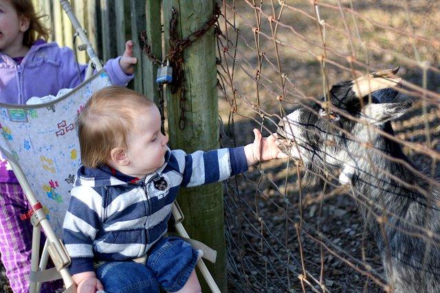 ian petting the goat