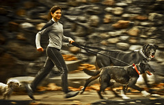 on the run (TheWalkinMan) Tags: motion blur dogs running jogging nikonsunglassesscoredatthethriftstore