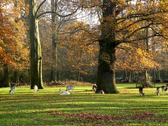 Deer in the Park (Stan Giling www.stangiling.com) Tags: park autumn trees holland fall haarlem bomen shadows deer autumncolors herfstkleuren hert hertenkamp herten schaduwen haarlemmerhout