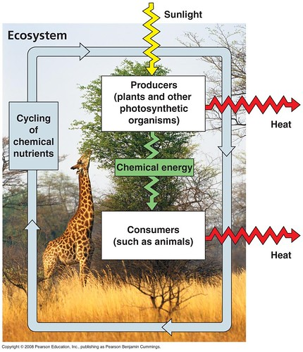 Nutrient cycling and energy flow in an ecosystem