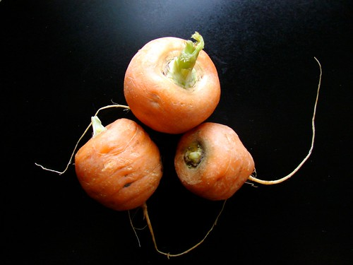 stubby carrots