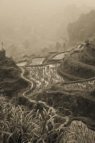 Rice terraces (by niklausberger)