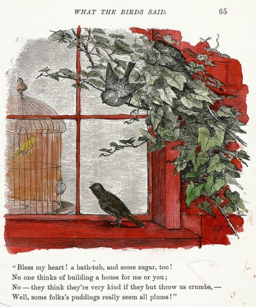what the birds said..
