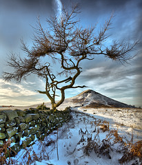 Roseberry Topping under the Which Way Tree....... (Tall Guy) Tags: uk snow tree photography photo photos hiking northyorkmoors roseberrytopping tallguy