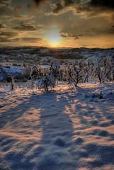 neve3 (francesco sgroi) Tags: italy snow florence nikon alba sigma tuscany neve chianti firenze toscana inverno autunno freddo hdr vigne certaldo controluce collina nevicata olivi gelata sigma1020 valdelsa gelido montaccio mantobianco wildeangle 18dicembrenevicata