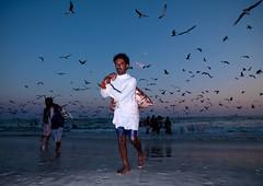 Fishermen back from fishing, Salalah, Oman (Eric Lafforgue) Tags: sunset sea sky people mer seagulls fish beach fishing indian flash arabic hasselblad worker ara