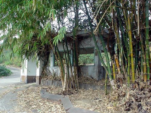14.廢棄的君營與竹林
