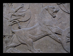 British Museum, London (Martin Beek) Tags: shadow art iraq lion picture relief britishmuseum nineveh assyria antiquity