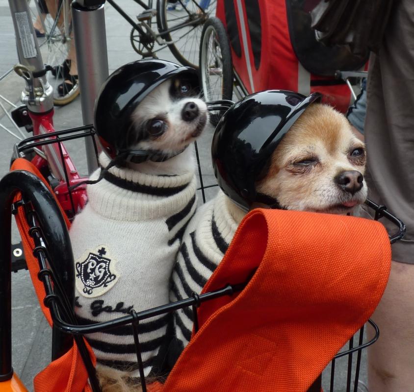 Doggie Pedal Parade