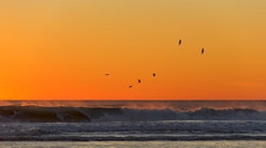 Flight (suzanne~) Tags: sunset evening bird ocean sea waves shoe beach coast spain andalusia conildelafrontera seaside