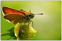 Butterfly and Flower (pinecreekartist) Tags: friends photo amazing group the chiaramonte beautifulphoto pagrandcanyon wellsboropa themacrogroup nikonflickraward sunnywed pinecreekartist tiogacountypachiaramonte