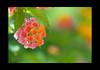 2009 06 19_Spania2009_0576_1 (Nbjorlo) Tags: flowers summer macro spain ashowoff
