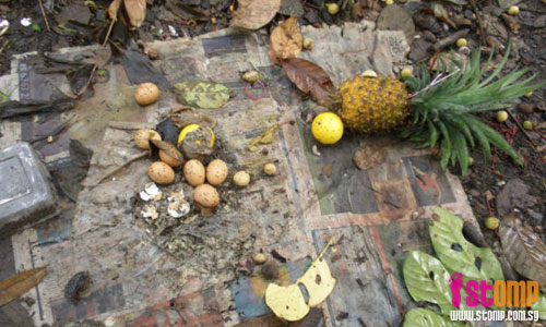 Free fruits in Bukit Timah Nature Reserve